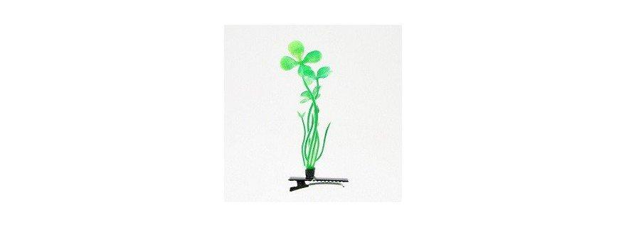 Plante à cheveux
